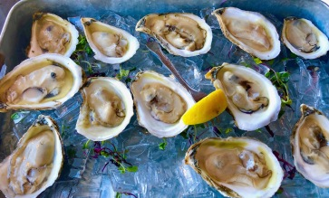 Damriscotta Oysters in New Hampshire